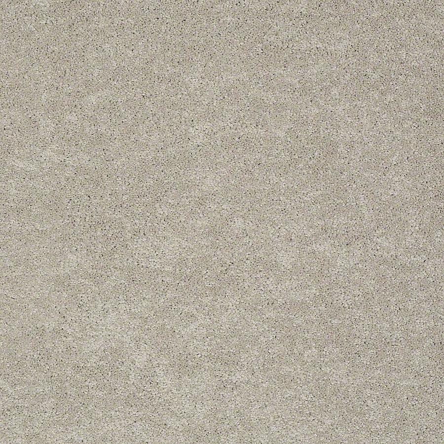 STAINMASTER Baxter III PetProtect Harley Plus Carpet Sample