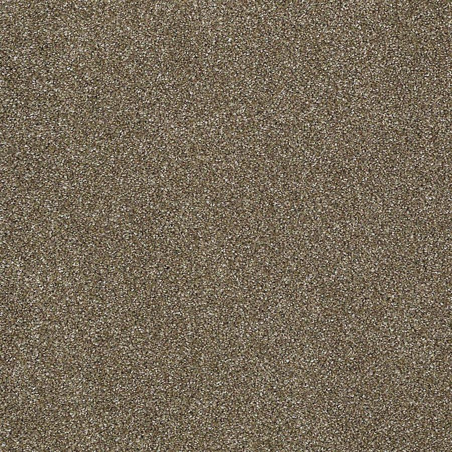 STAINMASTER PetProtect Baxter III Dachshund Carpet Sample