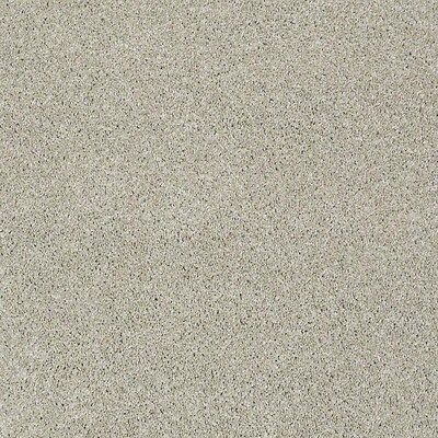 Stainmaster Petprotect Baxter Iv Marmaduke Carpet Sample At