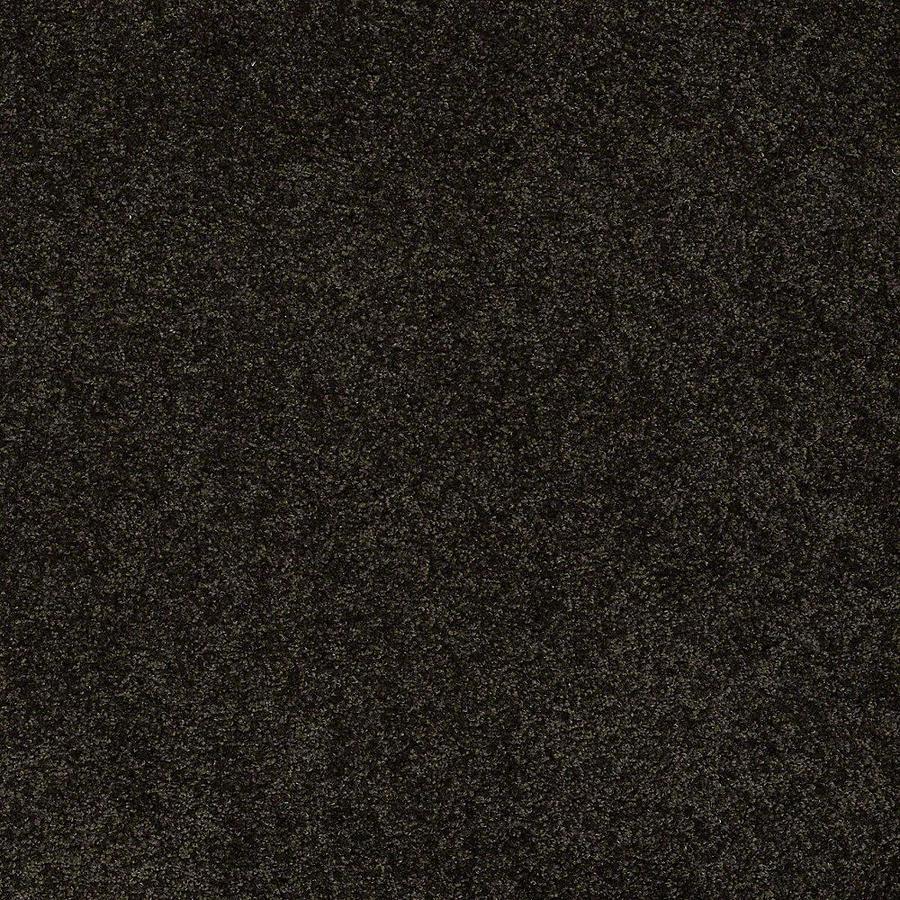 STAINMASTER Baxter IV PetProtect Bear Plush Carpet Sample
