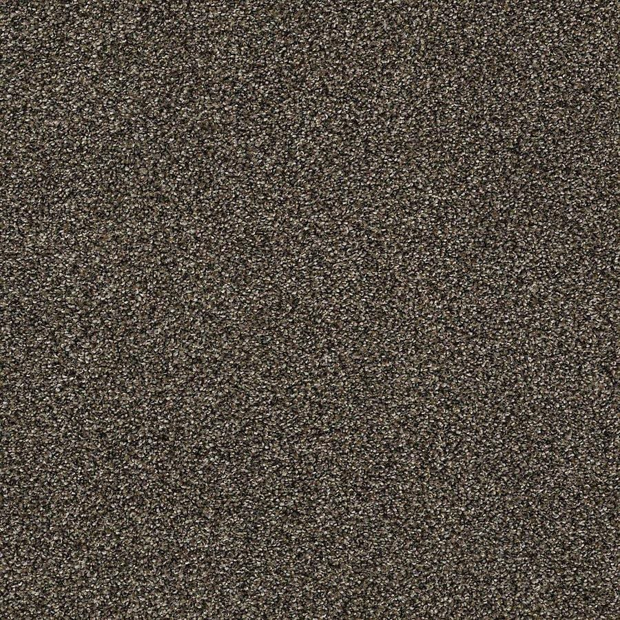 STAINMASTER Baxter IV PetProtect Sasha Plush Carpet Sample
