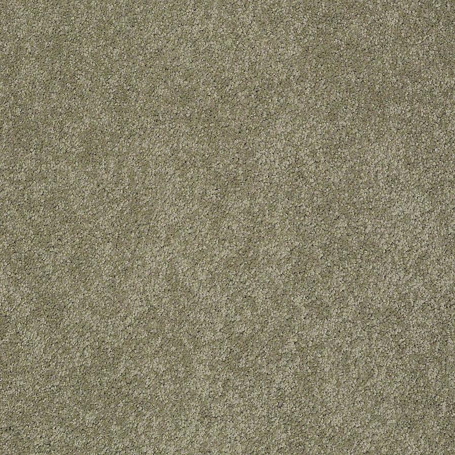 STAINMASTER PetProtect Baxter I Buddy Carpet Sample