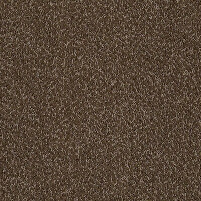 Stainmaster Petprotect Bianca Coco Carpet Sample At Lowes