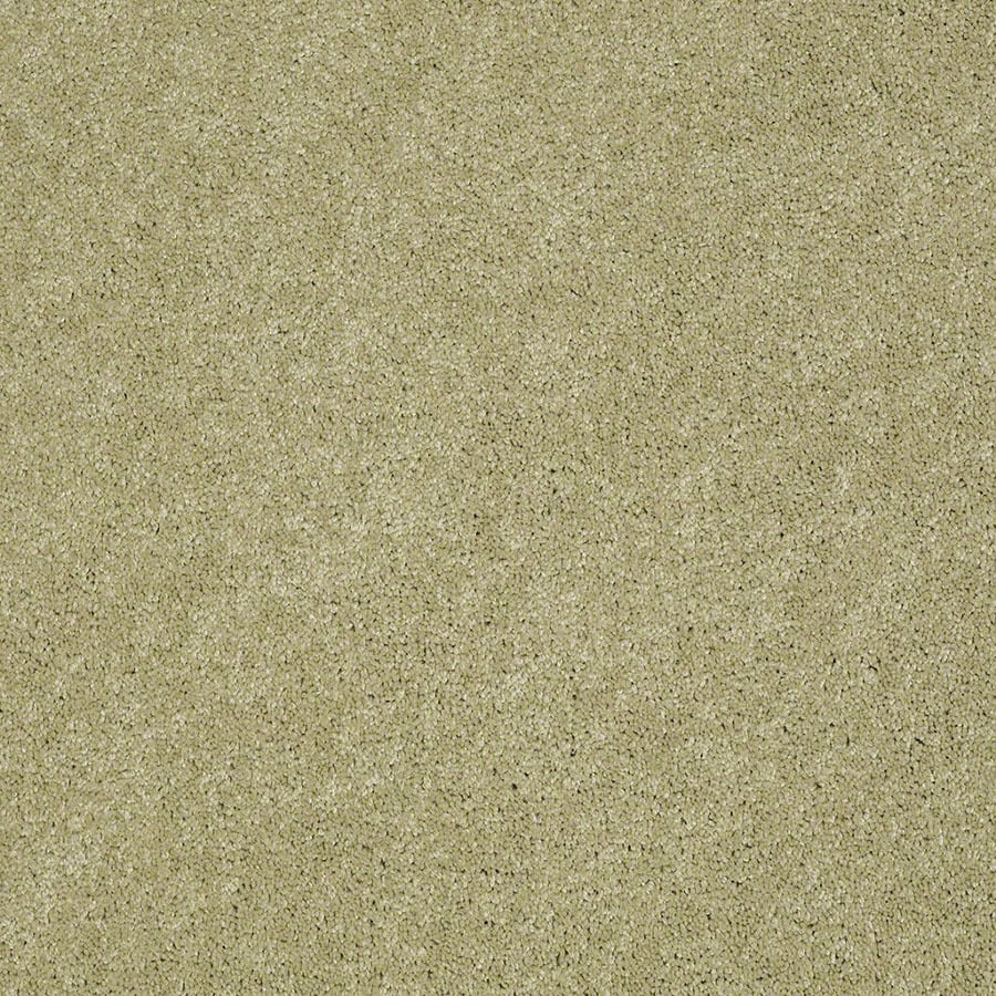 STAINMASTER Supreme Delight Active Family Sprout Plus Carpet Sample