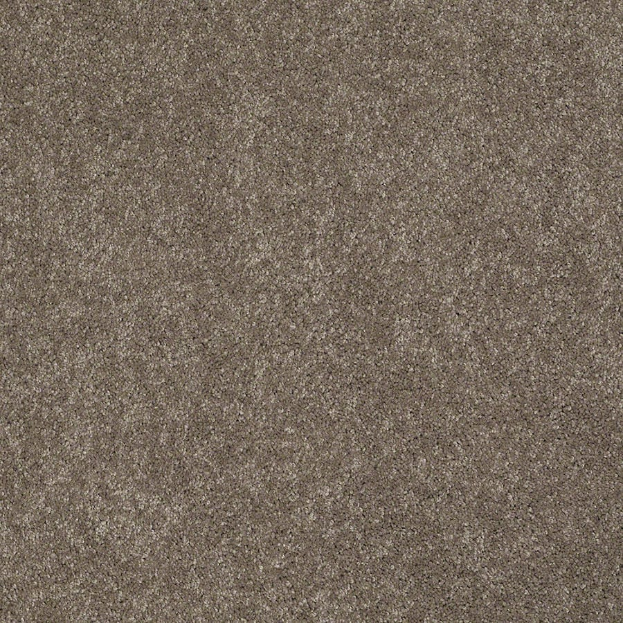 STAINMASTER Active Family Supreme Delight Misty Taupe Carpet Sample