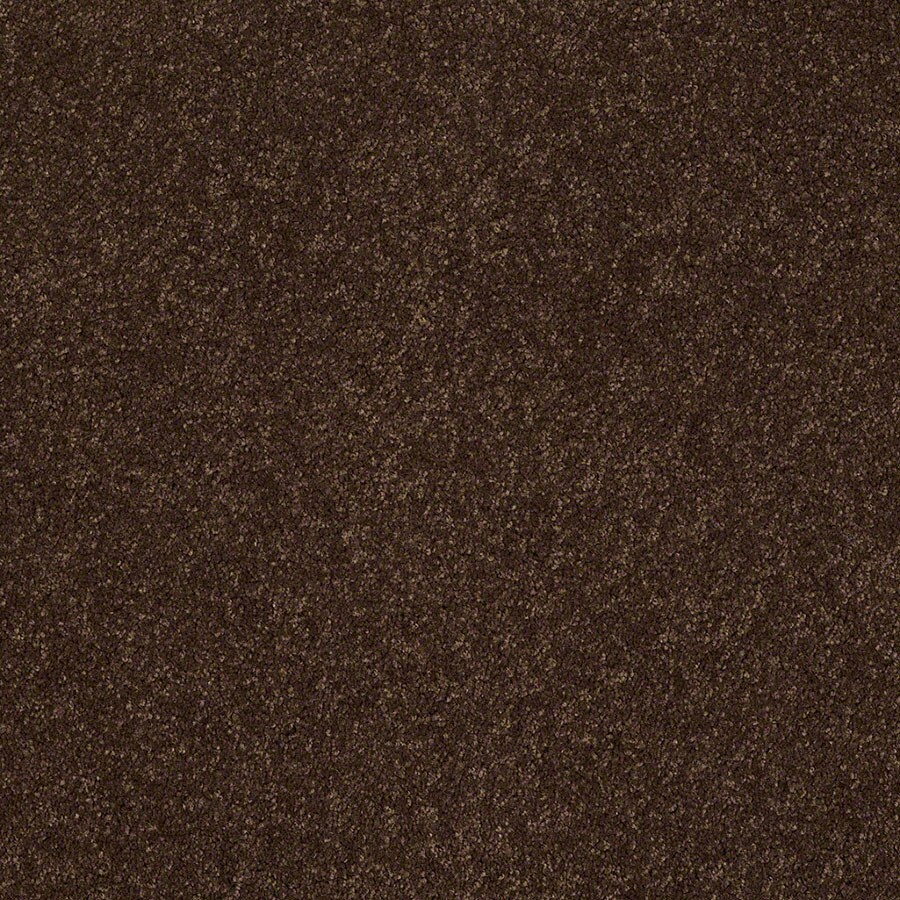 STAINMASTER Active Family Supreme Delight 3 Decaf Carpet Sample