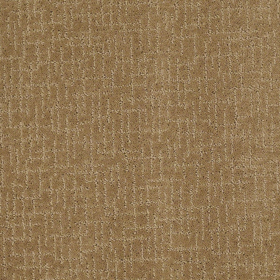 STAINMASTER Undeniable Active Family Starfish Cut and Loop Carpet Sample