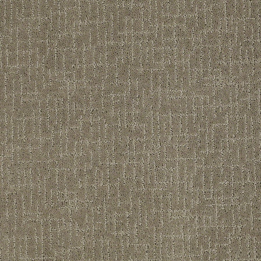 STAINMASTER Active Family Undeniable Greige Carpet Sample