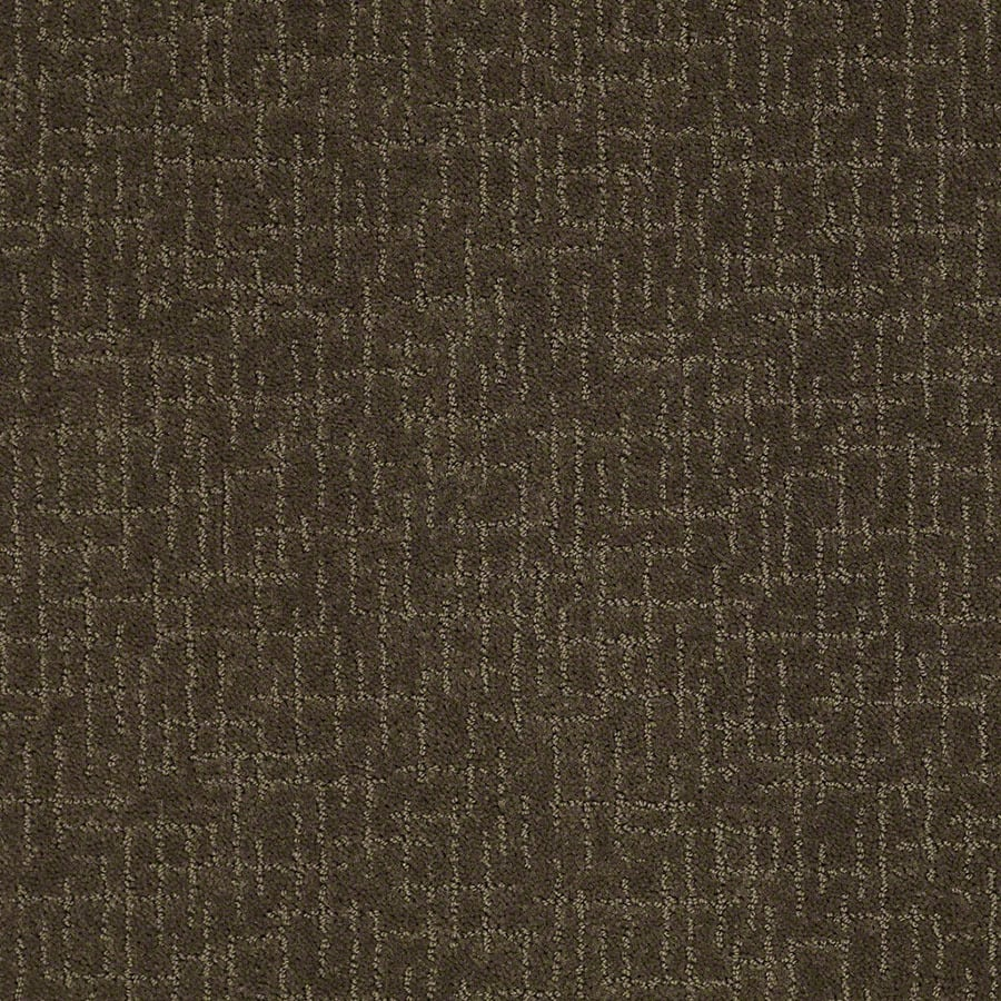 STAINMASTER Active Family Undeniable Shitake Berber/Loop Carpet Sample