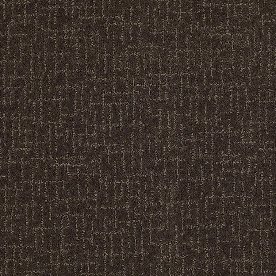 STAINMASTER Active Family Undeniable Dark Earth Carpet Sample