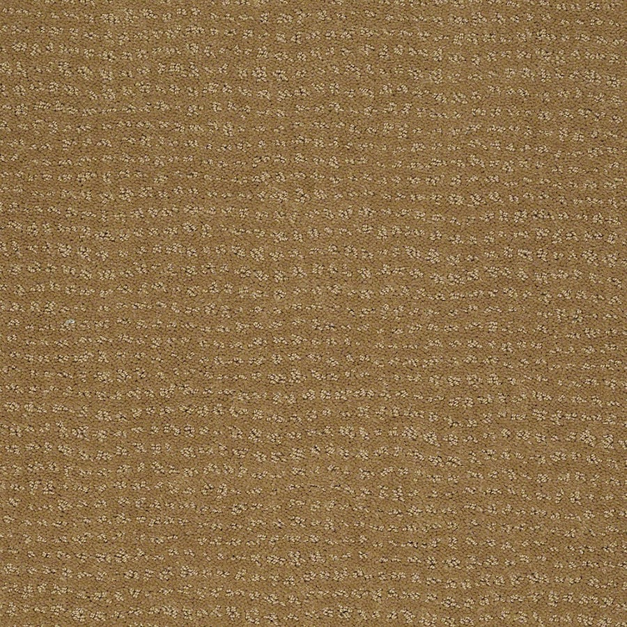 STAINMASTER Active Family Undisputed Starfish Carpet Sample