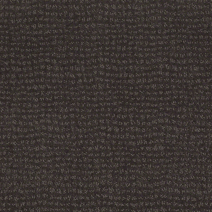 STAINMASTER Undisputed Active Family Falcon Cut and Loop Carpet Sample