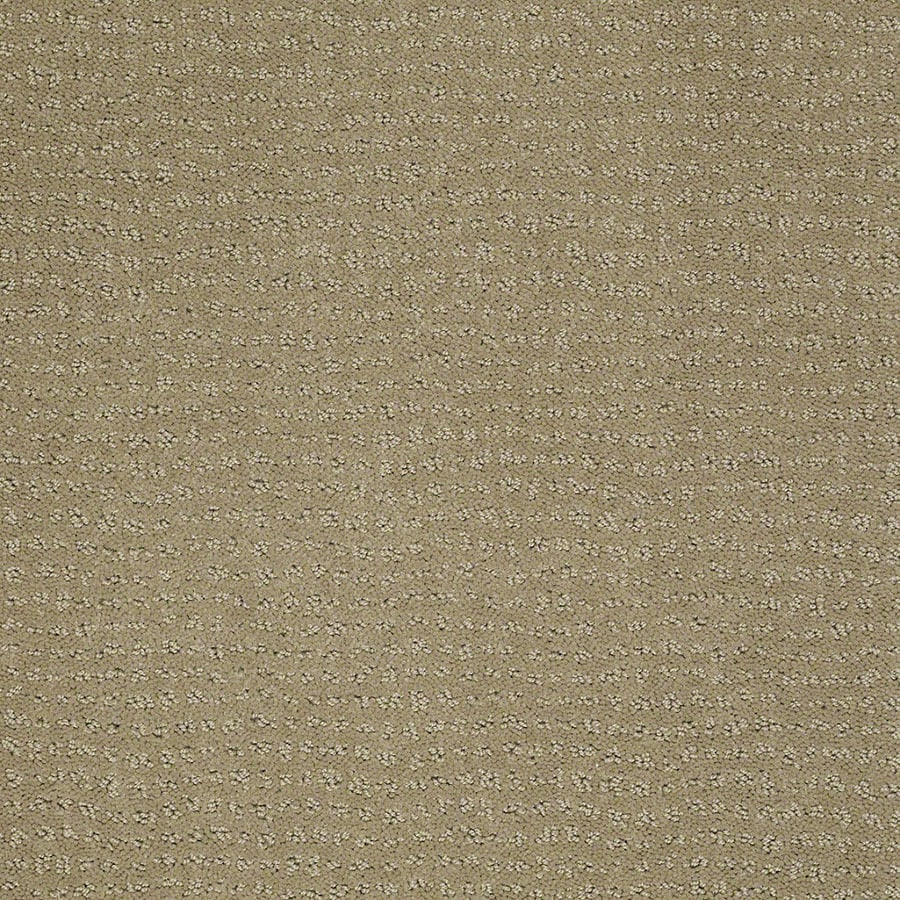 STAINMASTER Active Family Undisputed Fennel Carpet Sample