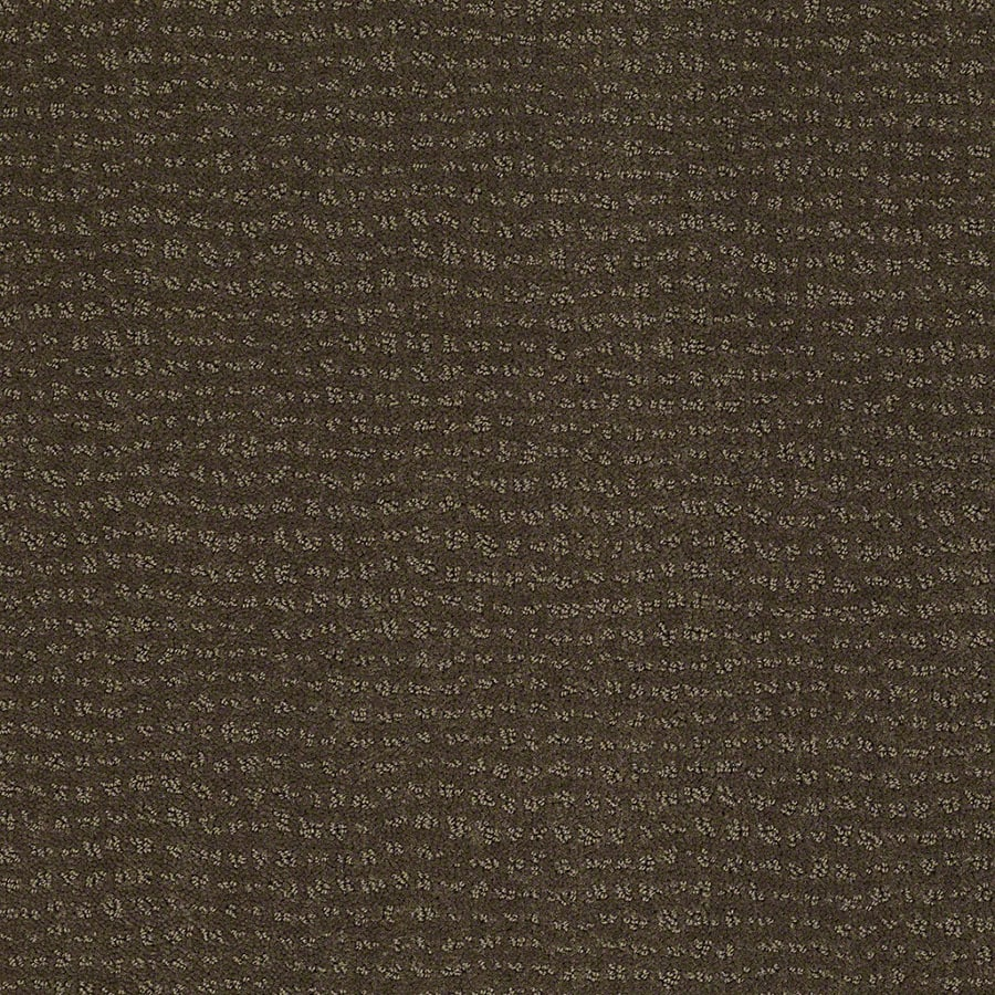STAINMASTER Active Family Undisputed Shitake Berber/Loop Carpet Sample