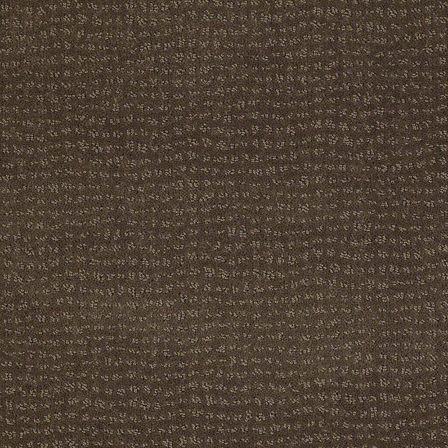 STAINMASTER Undisputed Active Family Timberline Cut and Loop Carpet Sample