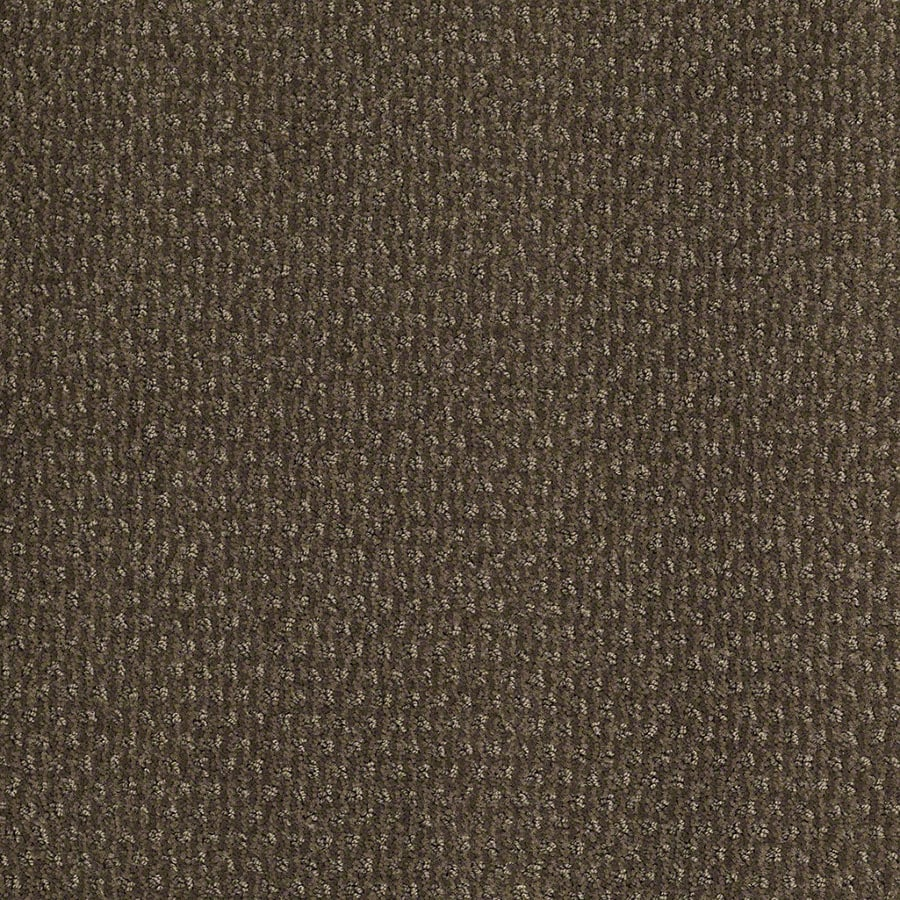 STAINMASTER St Thomas Active Family Oregon Trail Cut and Loop Carpet Sample