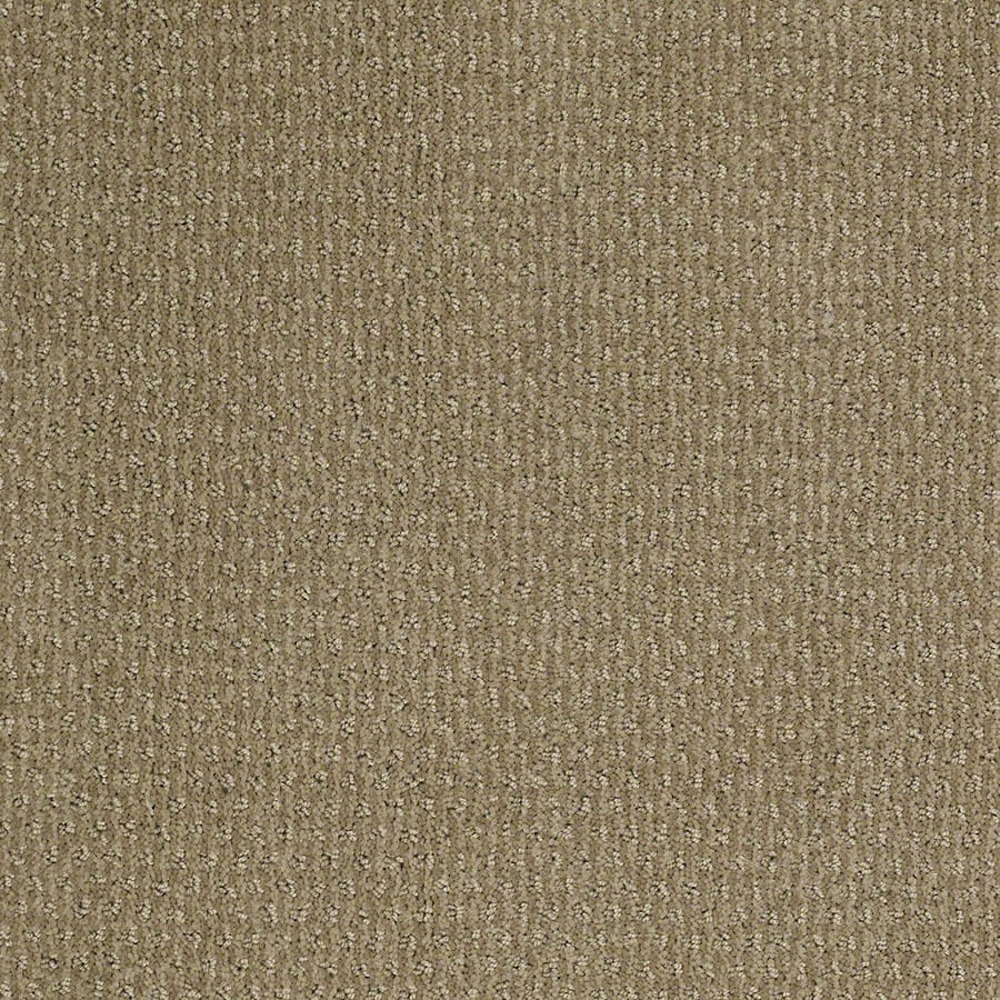 STAINMASTER Active Family St Thomas Fennel Carpet Sample