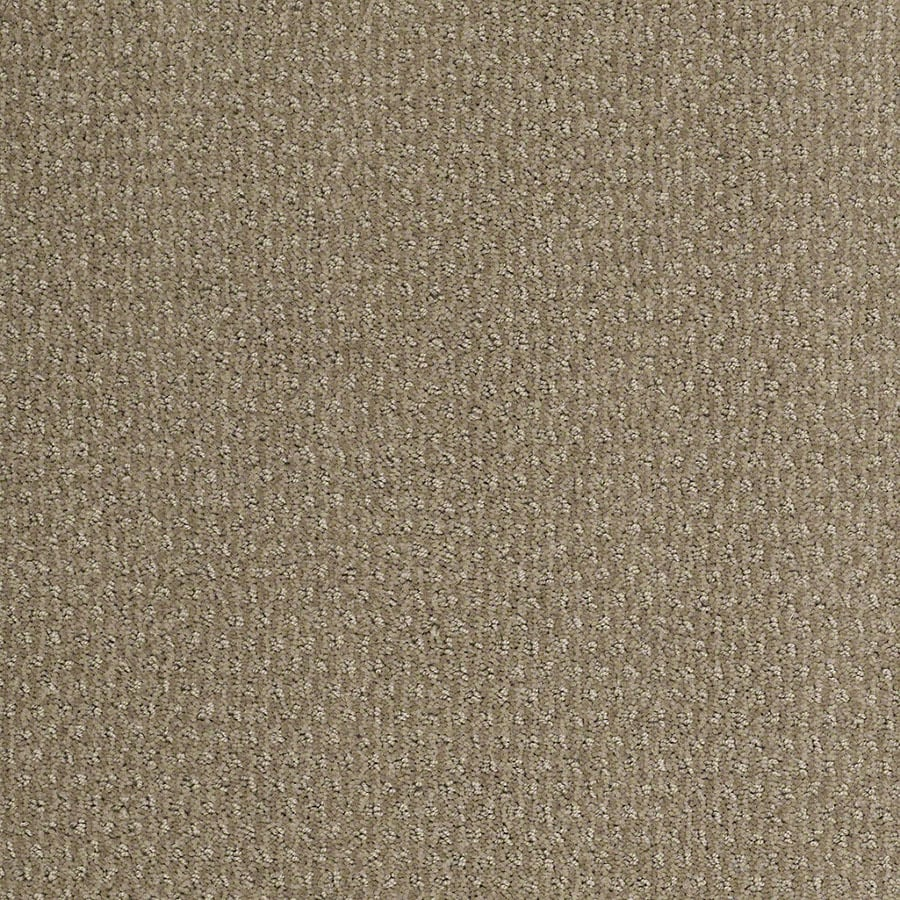 STAINMASTER Active Family St Thomas Hazy Carpet Sample