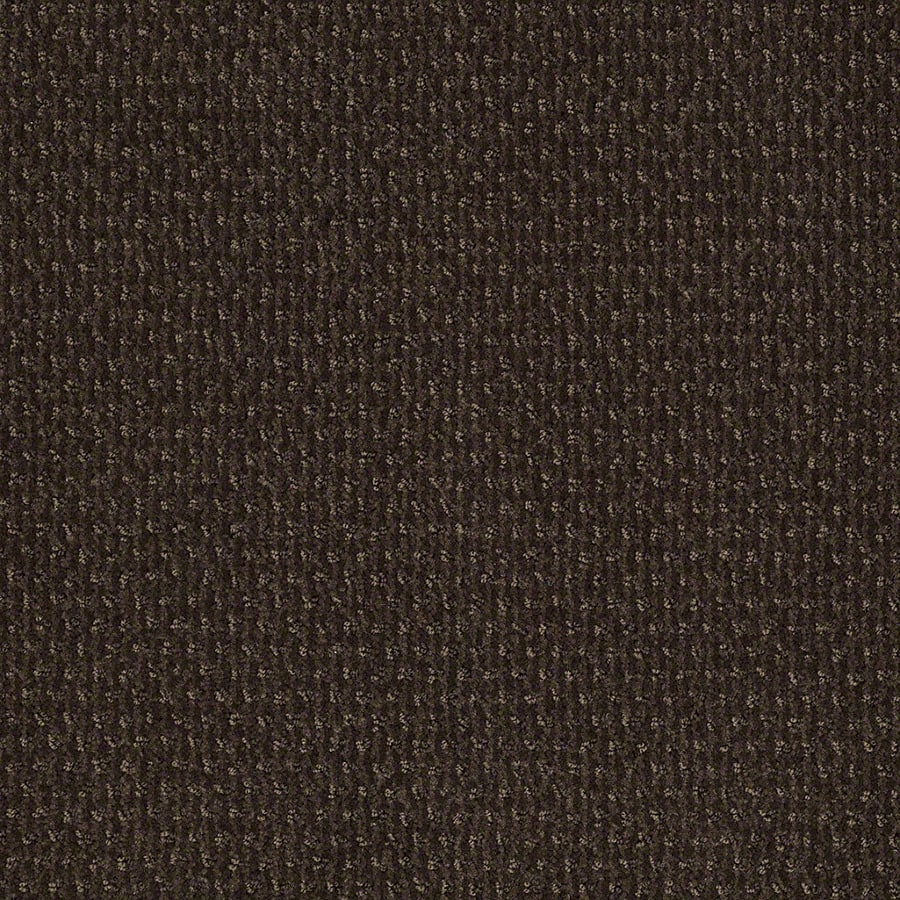 STAINMASTER St Thomas Active Family Dark Earth Cut and Loop Carpet Sample