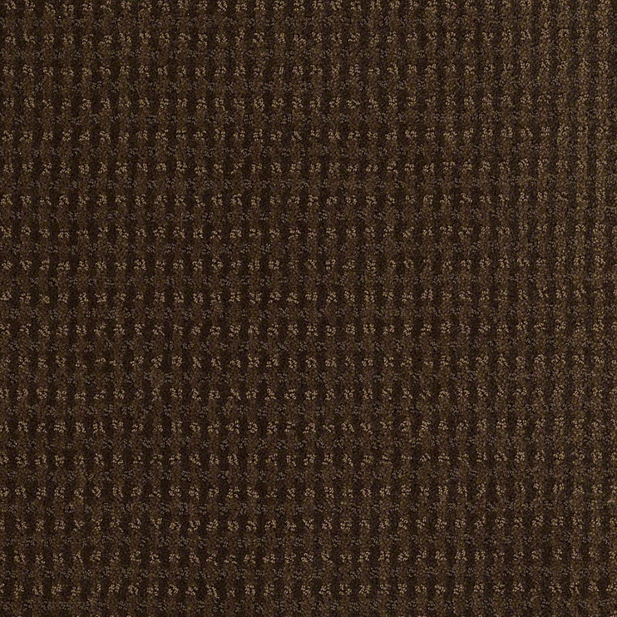 STAINMASTER Active Family St John Cub Carpet Sample