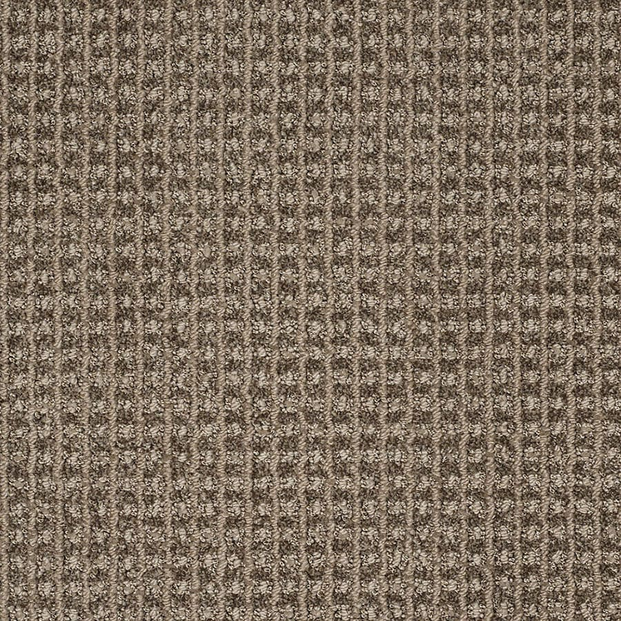 STAINMASTER Rising Star Trusoft Storm Cloud Cut and Loop Carpet Sample