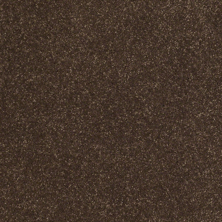 STAINMASTER Luscious IV (S) TruSoft Dark Chocolate Plus Carpet Sample