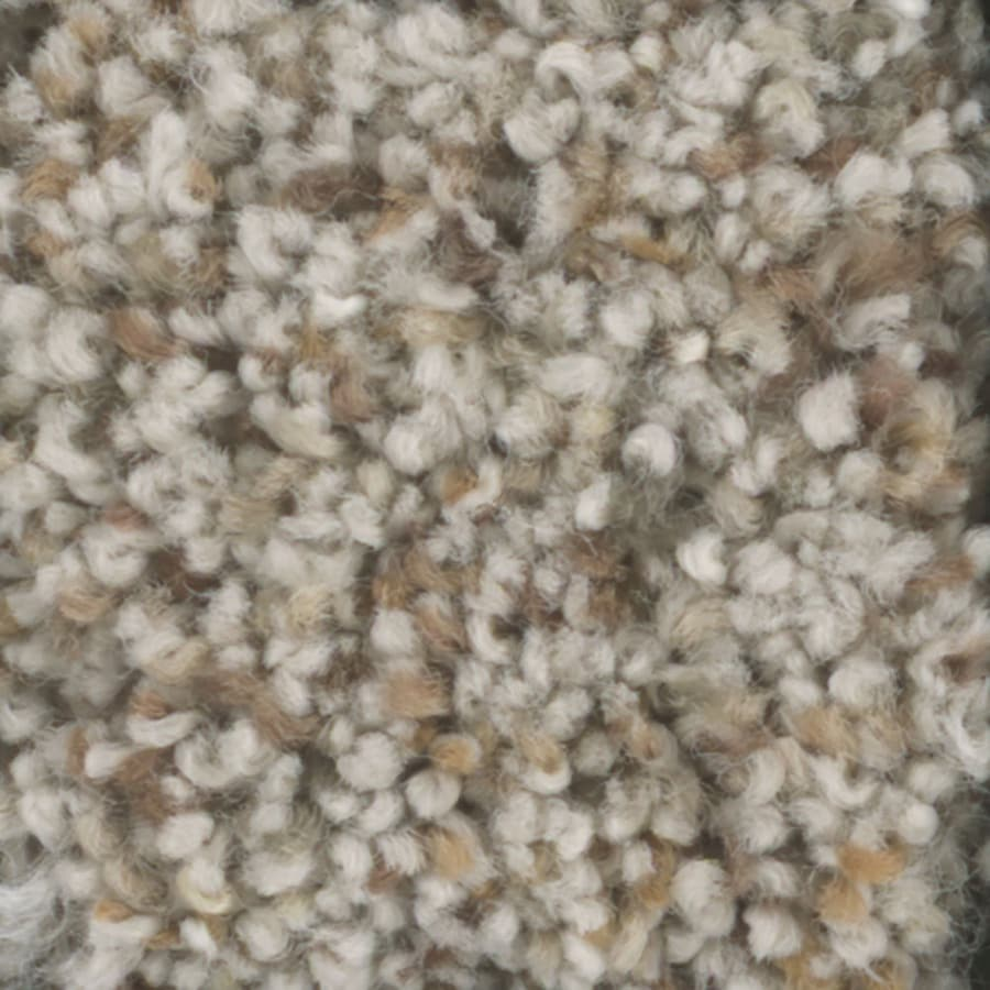 STAINMASTER Pronounced Beauty 3 TruSoft Birch Bark Plush Carpet Sample