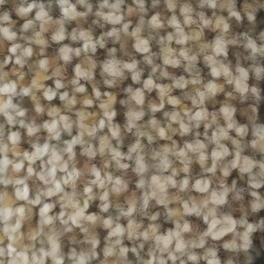 STAINMASTER TruSoft Pronounced Beauty 1 Timber Plush Carpet Sample