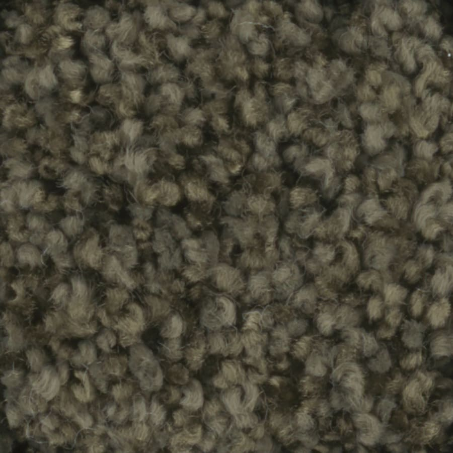 STAINMASTER TruSoft Dynamic Beauty 1 Mistletoe Carpet Sample