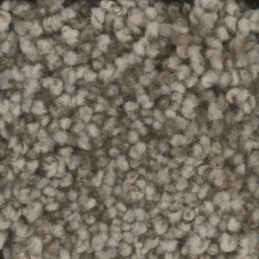 STAINMASTER Dynamic Beauty 1 TruSoft Wheat Toast Plush Carpet Sample
