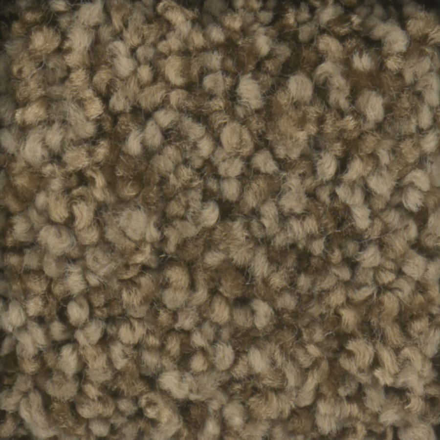 STAINMASTER TruSoft Dynamic Beauty 3 Dry Creek Carpet Sample