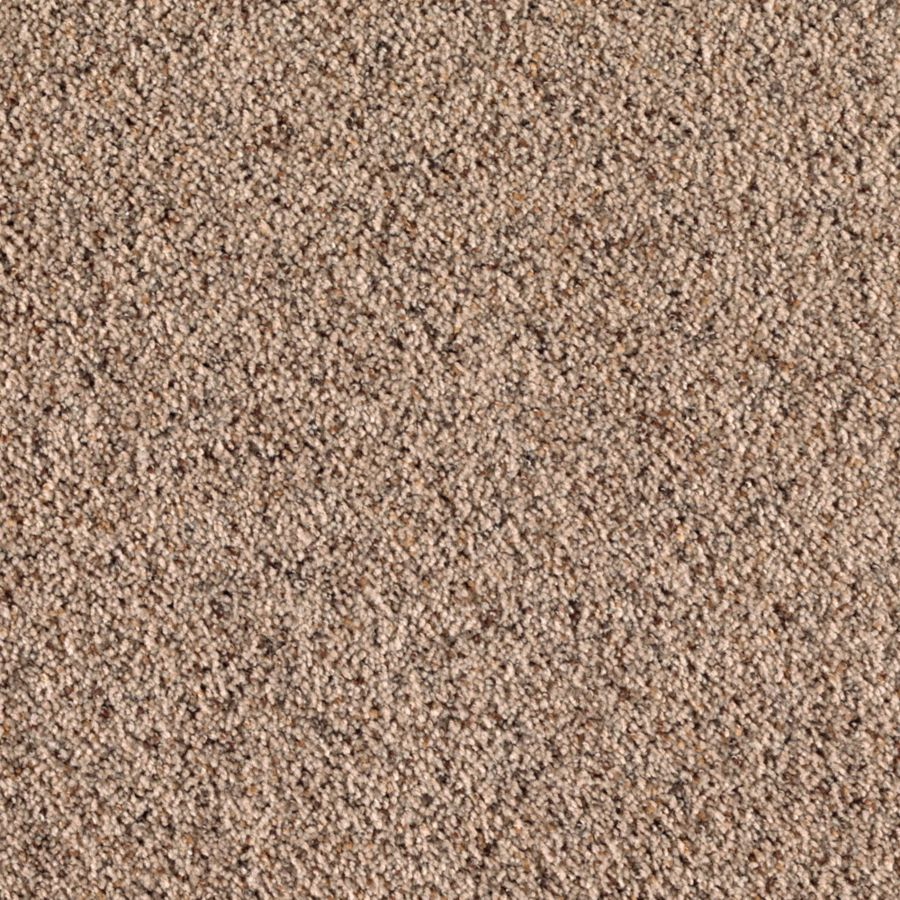 STAINMASTER Essentials Dream Big I Bittersweet Carpet Sample