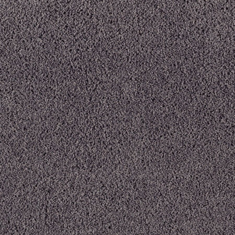 STAINMASTER Renewed Touch I Essentials Electrical Plush Carpet Sample
