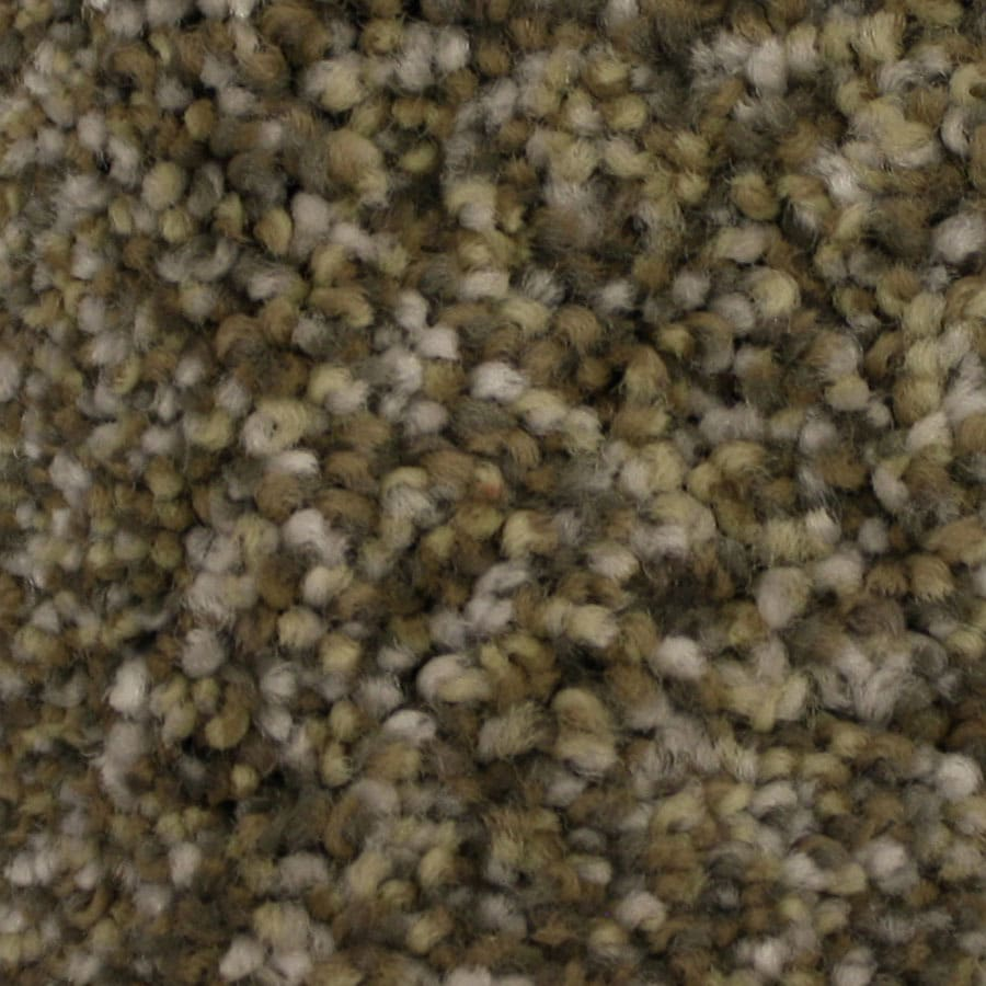 STAINMASTER PetProtect Side Kick Devotion Carpet Sample