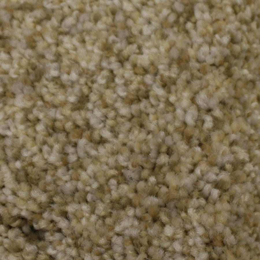 STAINMASTER Companion Petprotect Admiration Plus Carpet Sample
