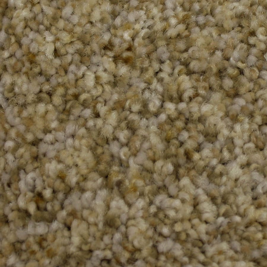 STAINMASTER Companion Petprotect Loyalty Plus Carpet Sample
