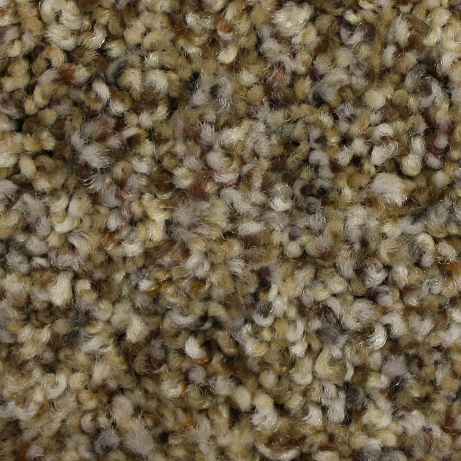 STAINMASTER Companion PetProtect Untouchable Plush Carpet Sample