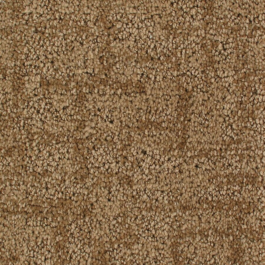 STAINMASTER Galaxy Active Family Surface Cut and Loop Carpet Sample