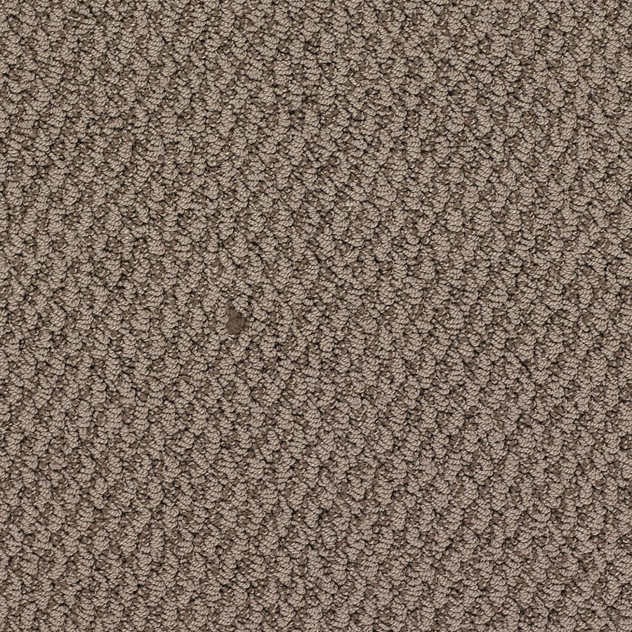 STAINMASTER Active Family Oracle Oliver Twist Berber/Loop Carpet Sample