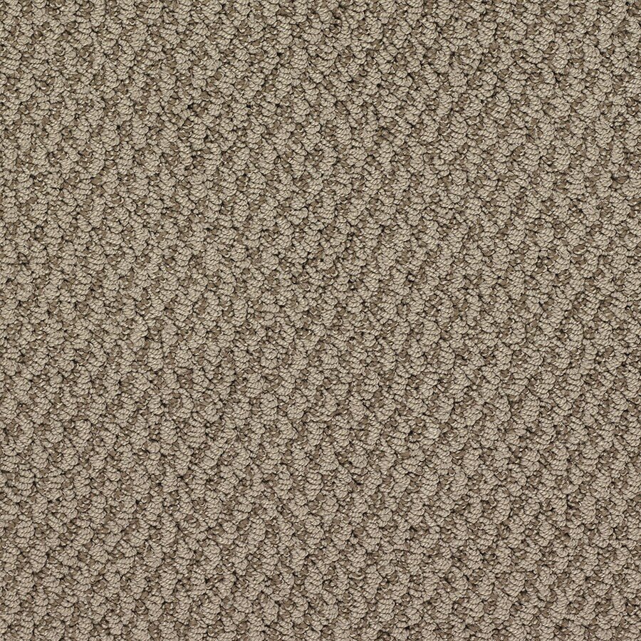 STAINMASTER Oracle Active Family King Tut Berber Carpet Sample
