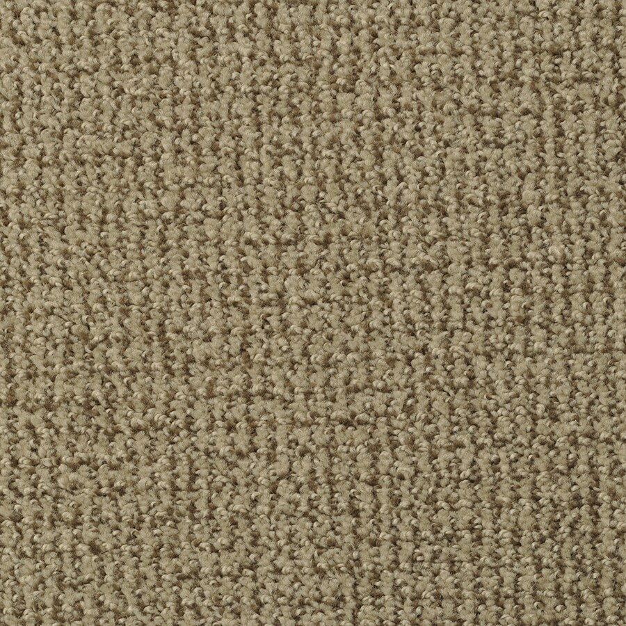 STAINMASTER Morning Jewel Active Family Coco Cut and Loop Carpet Sample