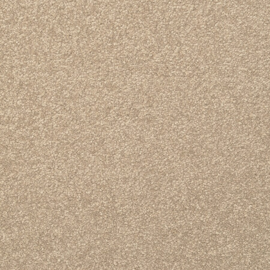 STAINMASTER Active Family Influential Tavern Plush Carpet Sample