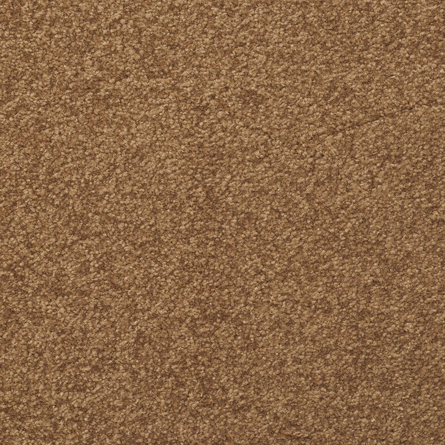 STAINMASTER Active Family Influential Chestnut Carpet Sample