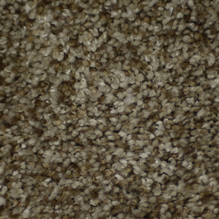 STAINMASTER Cinema Active Family Seminole Frieze Carpet Sample