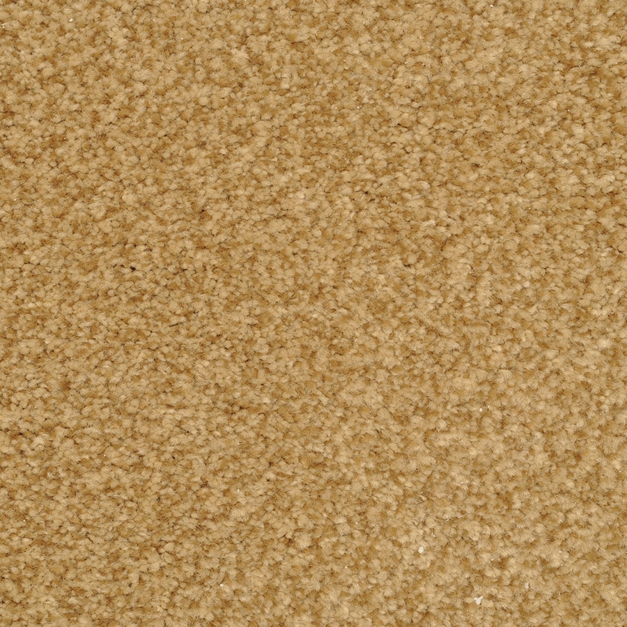 STAINMASTER Active Family Informal Affair Campus Plush Carpet Sample