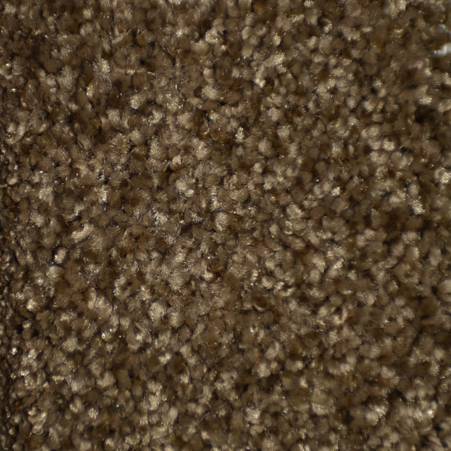STAINMASTER Clearman Estates Trusoft Peekskill Plus Carpet Sample