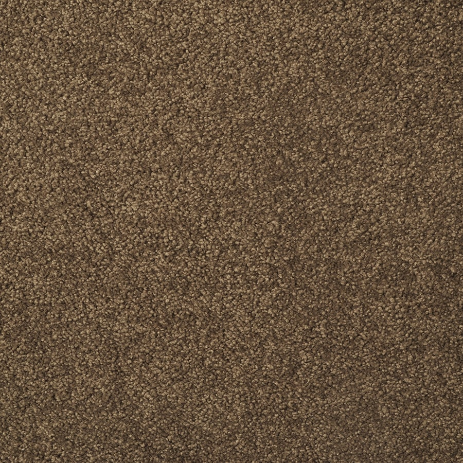 STAINMASTER TruSoft Best of Class Brown Log Carpet Sample
