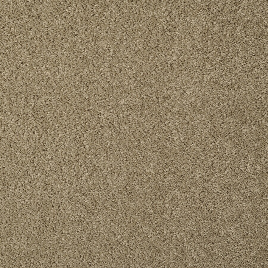STAINMASTER TruSoft Best of Class Elmwood Carpet Sample
