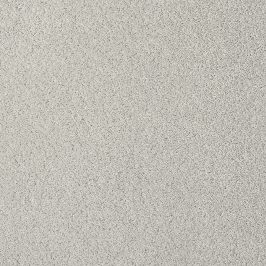 STAINMASTER TruSoft Best of Class Night Fall Carpet Sample