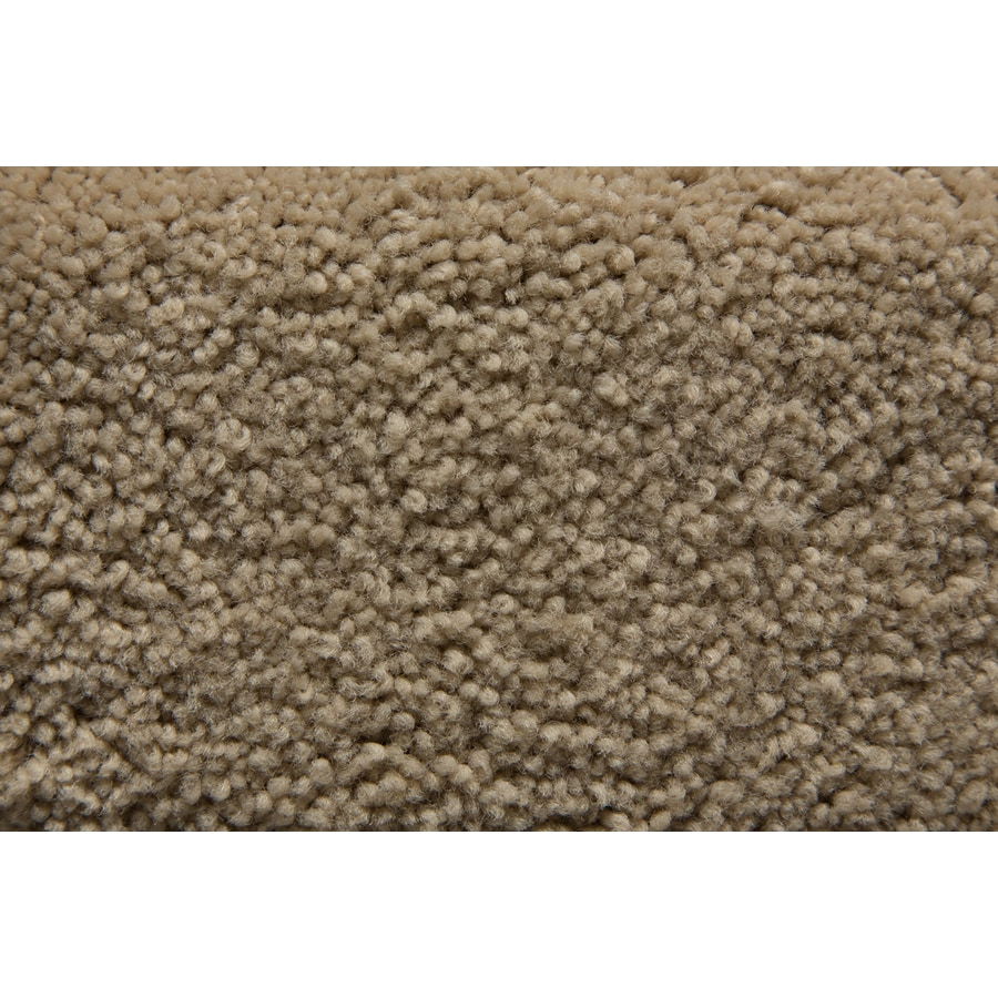 STAINMASTER Savoy Active Family Talon Plus Carpet Sample